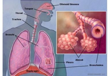 Více o tréninku dýchání